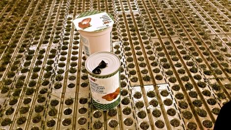 (Beinahe) lebensgrosse Joghurtbecher und Raviolidosen gab es als gelungenen Werbegag bei Migros M-Budget