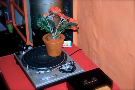 """""""Vielen Dank, für die Blumen..."""". Beste Installation ever: Eine künstliche Topfblume auf einem sich drehenden Plattenteller. Wir wollen das auch daheim!"""