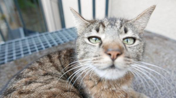 Selbst die Katze freute sich - aber nicht auf den Kater