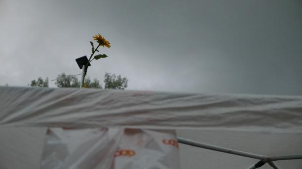 Nach dem Regen schien aber bald wieder die Sonne(nblume)