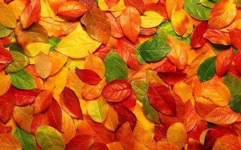 autumn-leaves-wallpaper-4